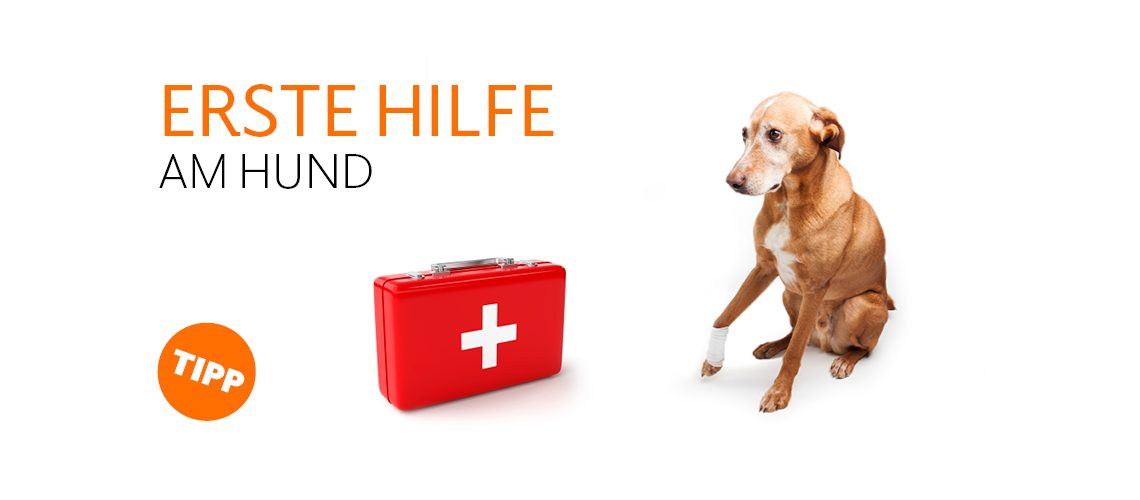 TAV-20-001_Erste _Hilfe_Hund_Website