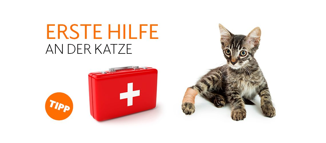 TAV-20-001_Erste _Hilfe_Katze_Website