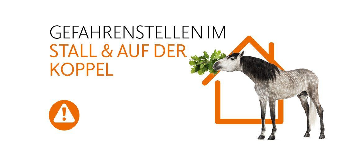 TAV-20-001_Pferdehaushalt_Gefahren_Website_1140x500px