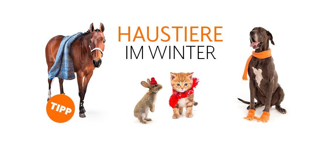TAV-20-001_Winterbesonderheiten_Website