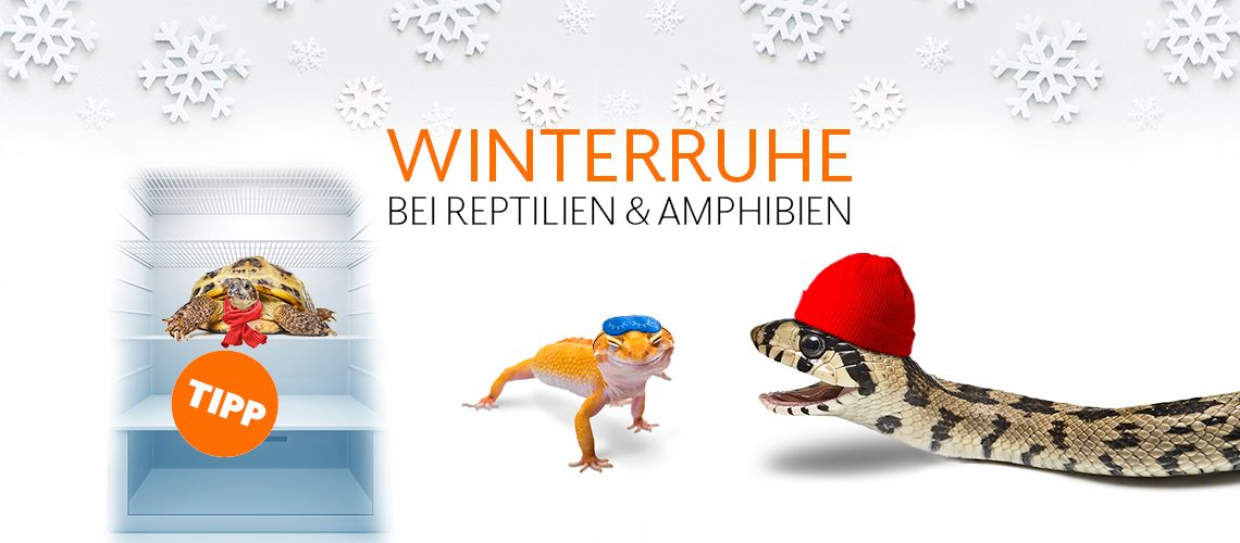 TAV-20-001_Winterruhe_Website