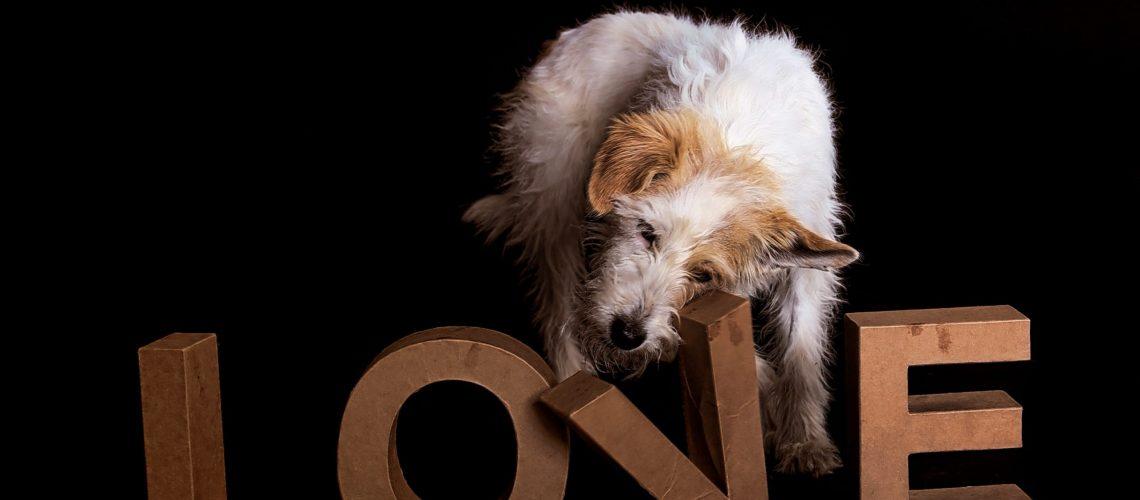 TAVANI unterstützt Tierschutzvereine in Deutschland